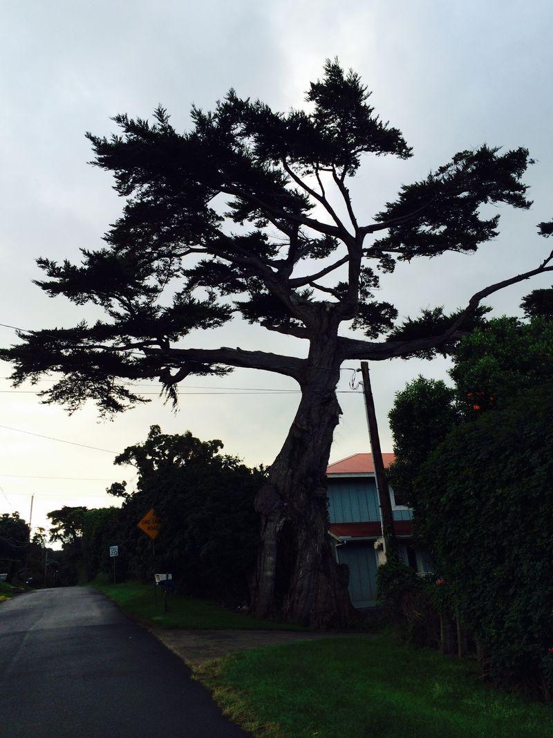 Tree stark