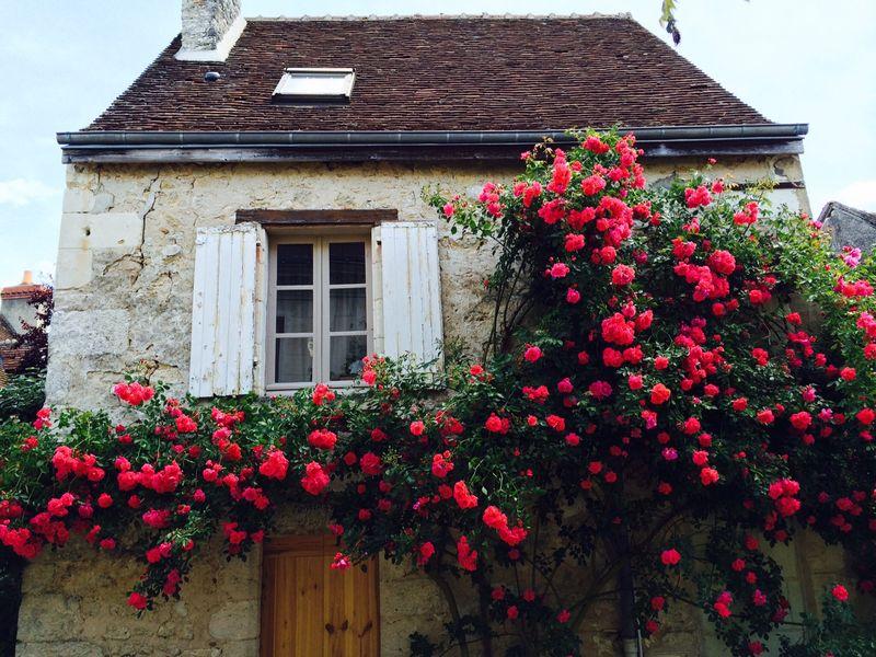 Chevigny roses 1