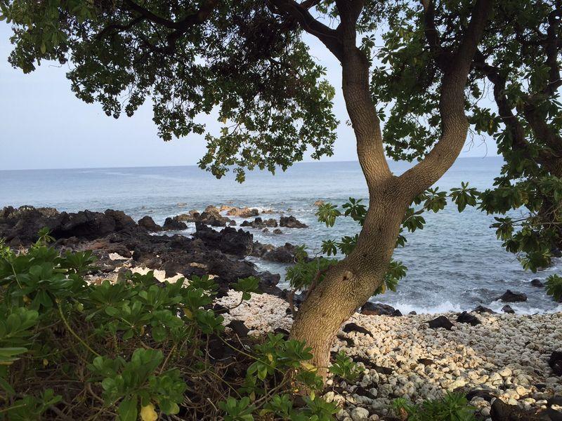 Morning ocean walk